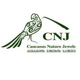 CNJ logo 2