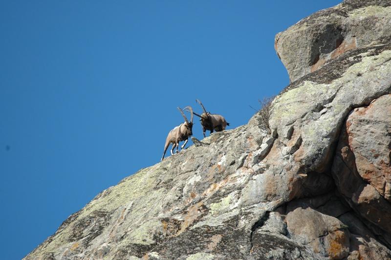 © WWF-Armenia/A.Malkhasyan